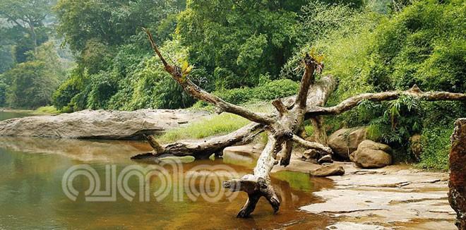 pooyamkutty7.jpg.image.784.410