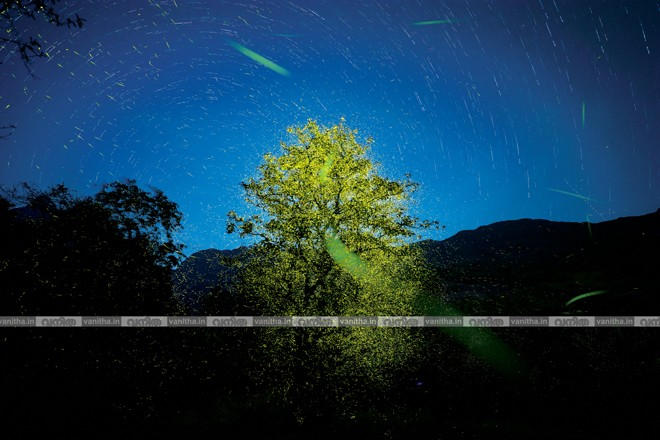 firefly-with-star-trails