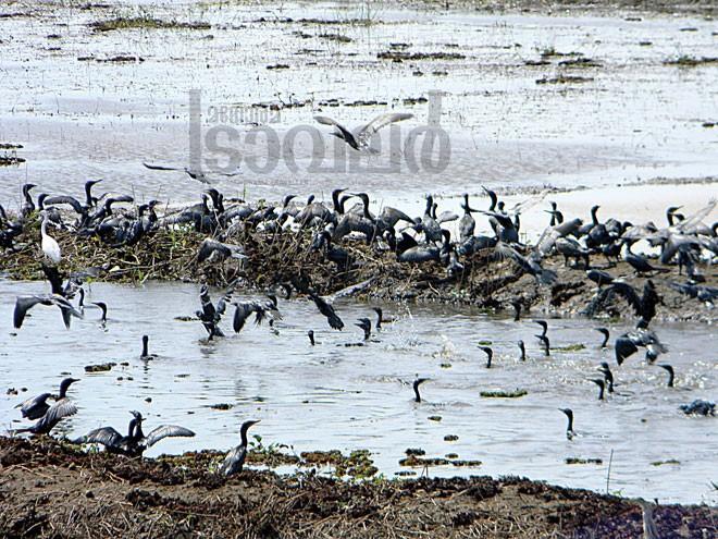 3)Chettuva-birds