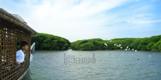 1)-Chettuva-Mangrove