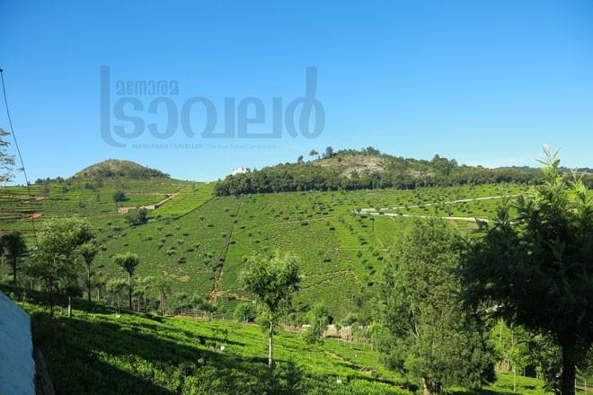 3)Tea-plantation---Kodanad