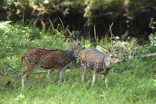 6)Deer