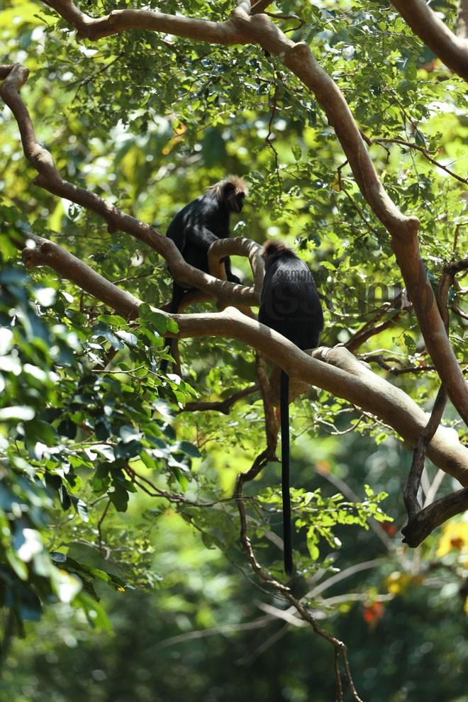 7)Monkey