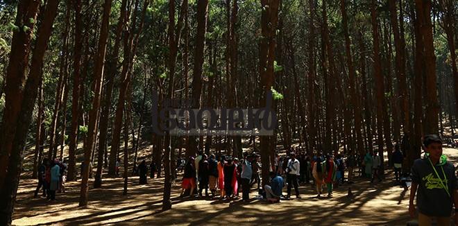 5)-Kodaikanal-pine-forest