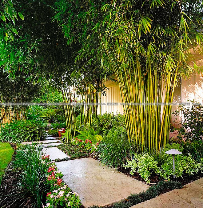 How-to-Grow-Bamboo-22