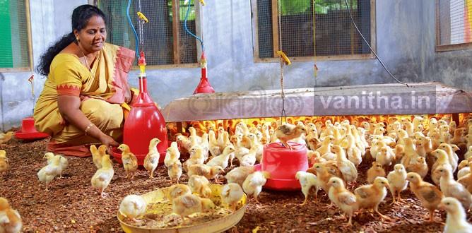 chicken003