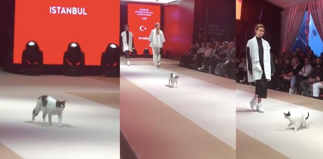 cat-walk-fashion-video