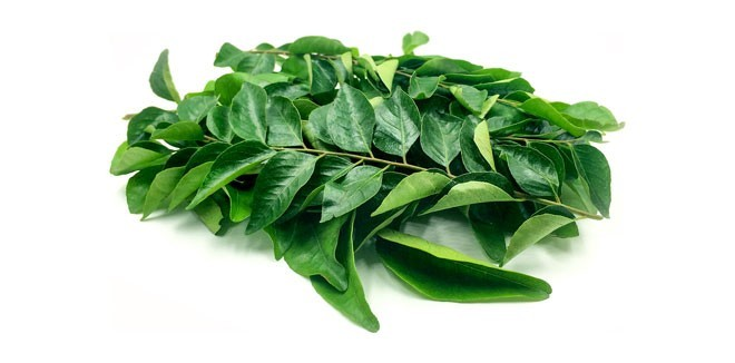 curry-leaves33344