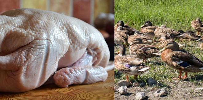 duck-meat5566