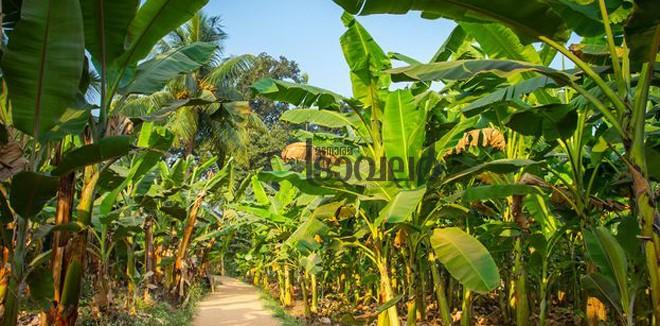 banana3333