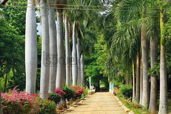 6)-Botanical-Garden