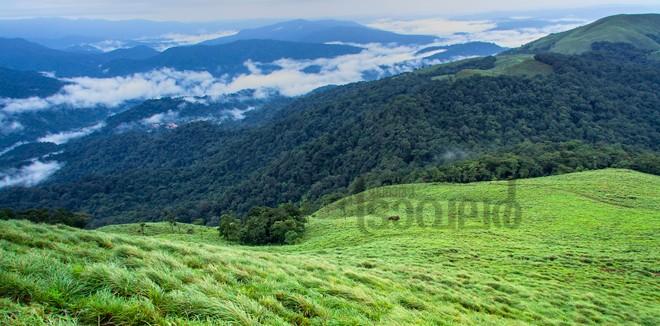 3)-Ponnambalamedu--forest