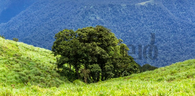 4)-Periyar-reserve---hills