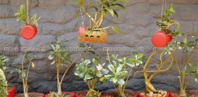 gardening-plants.jpg.image.470.246
