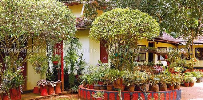 hobby-garden-konny-plants.jpg.image.784.410